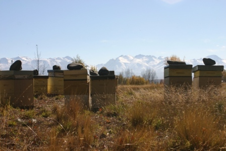 A stunning photo taken of New Zealand beehives, taken by an Australian beekeeper holidaying in NZ Photo courtesy Joel Mackey