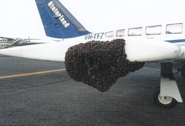 A rather large swarm of Asian bees clusters on a light plane at Cairns airport (see Letter to the Editor inside) Photo courtesy Graham Thornton