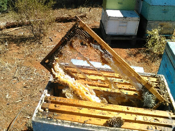 Hive damage caused by the heat wave in February. The hive went from being a strong three-decker to pretty much useless. 50 hives were lost in the load. Photo courtesy Anthony Deighton