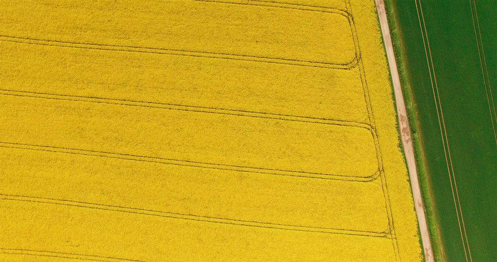 _yellow.jpg