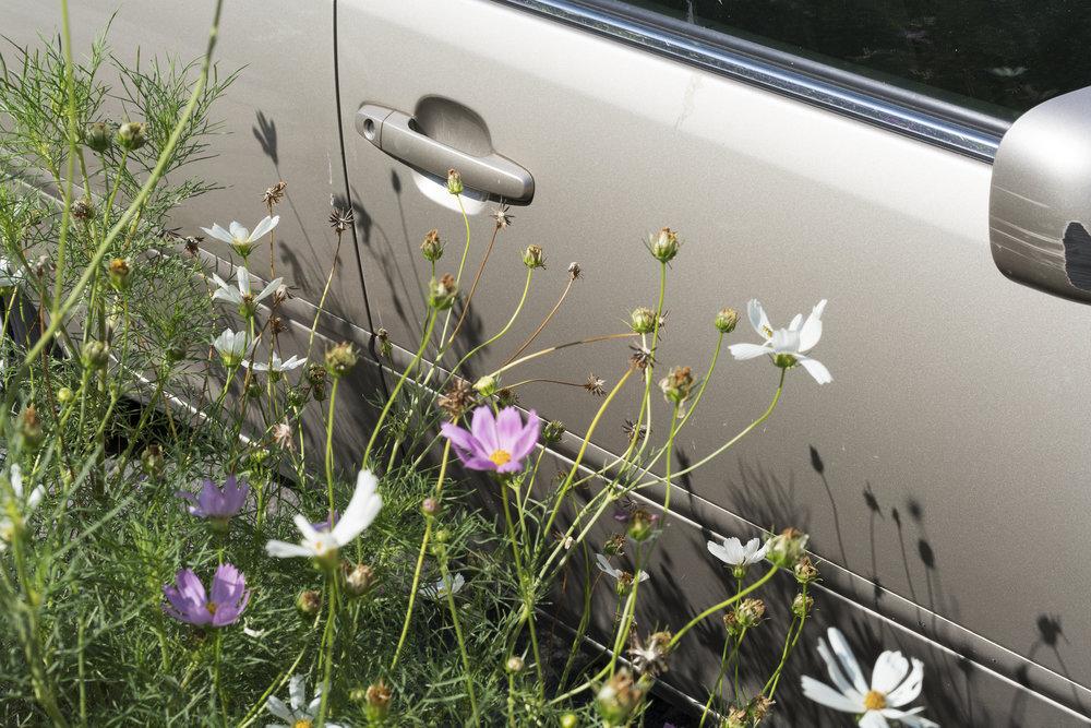 flowercar1DSC02535.jpg