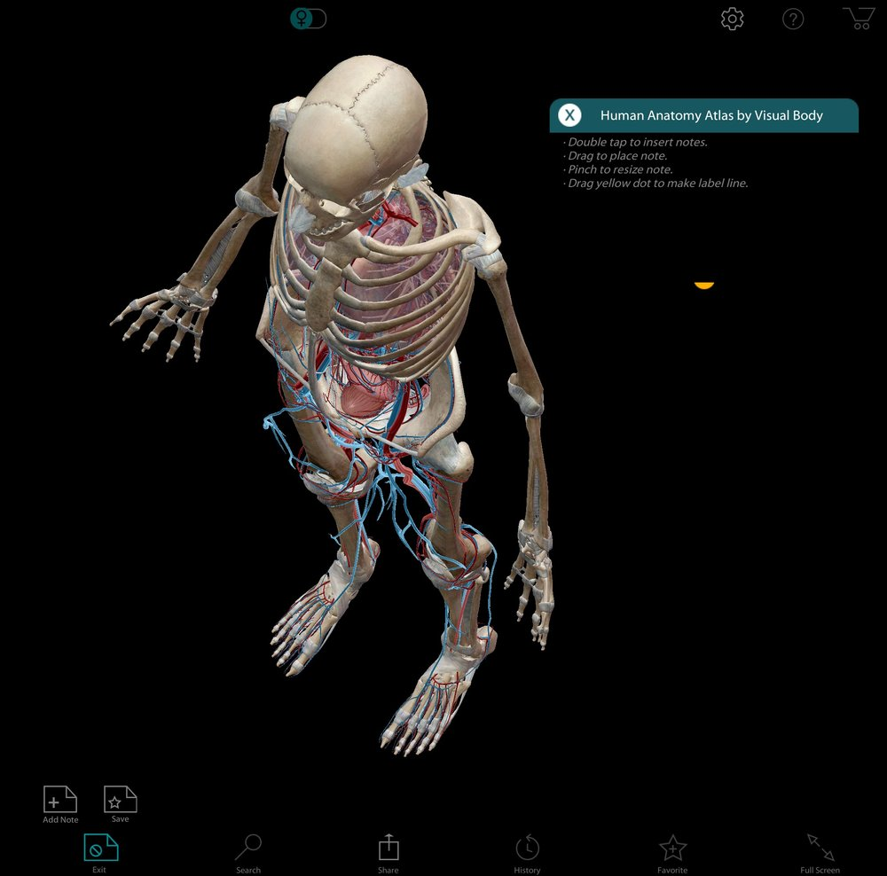 Body Anatomy — FDCC EVOLVE