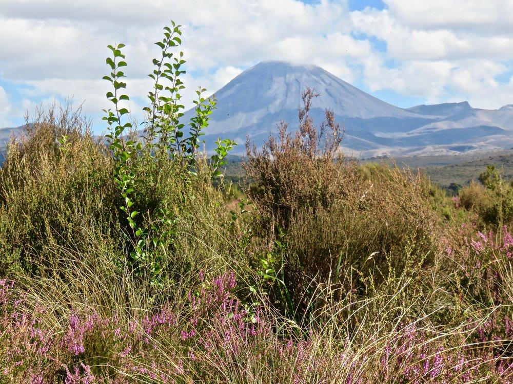 Tongariro National Park: Mt. Ngauruhoe, North Island's youngest volcano!