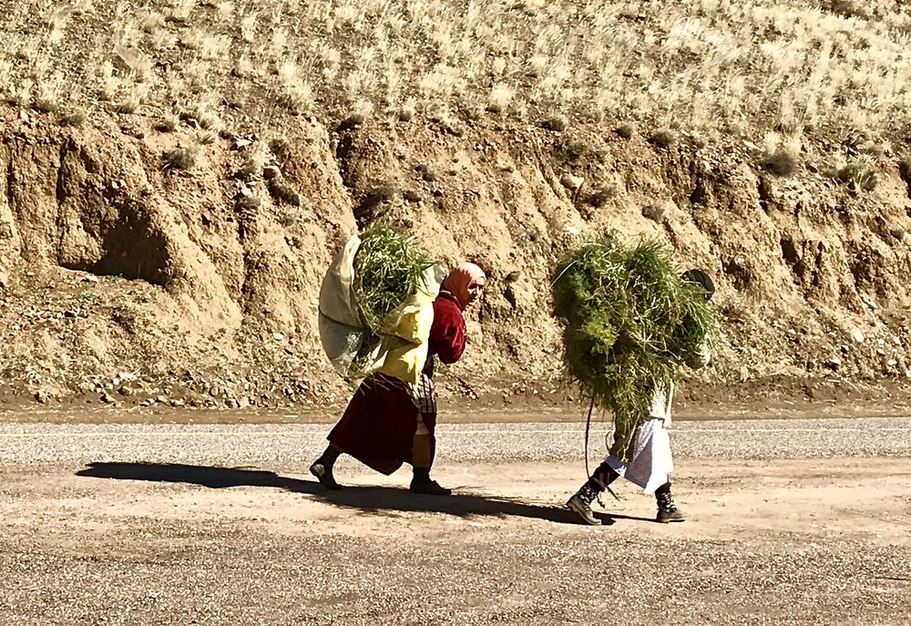 Not sure what kind of grass they're carrying!