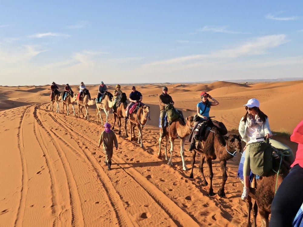 Our camel caravan