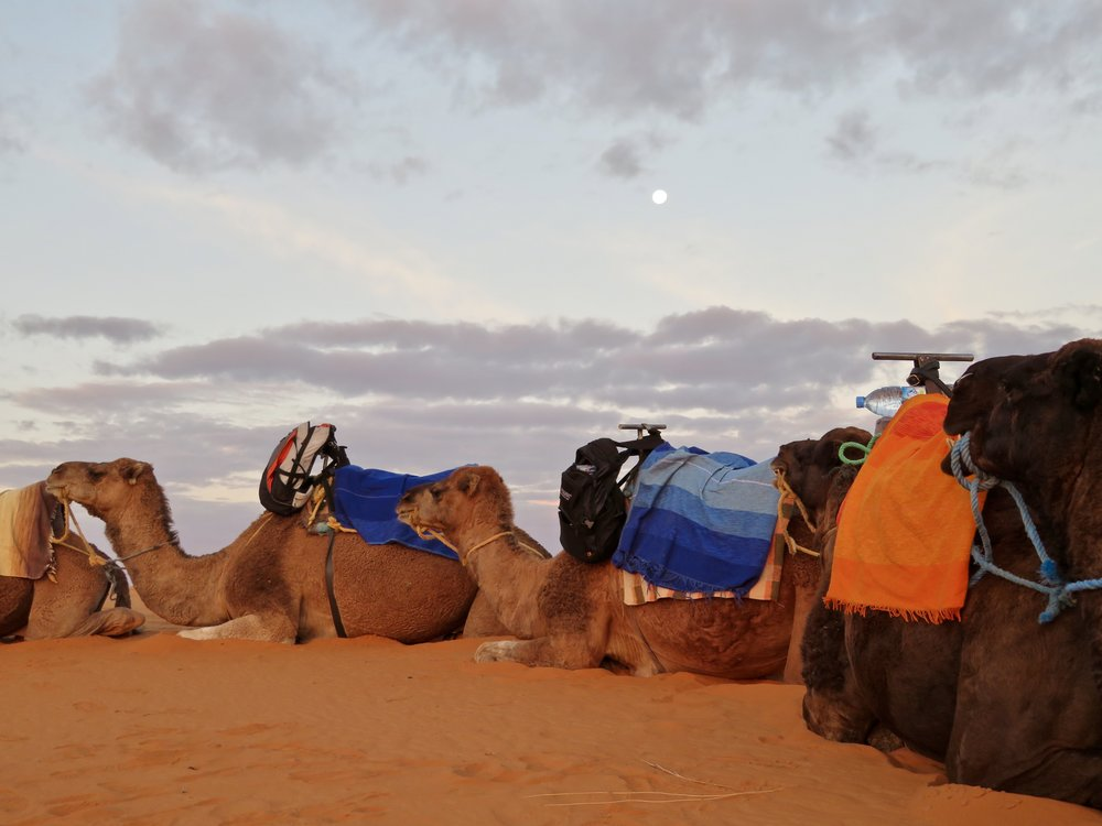 I know, lots of camel pics...I'm smitten!