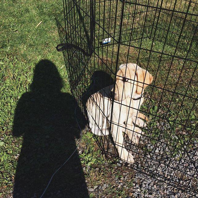 Ruger 💕 #puppy #puppiesofinstagram