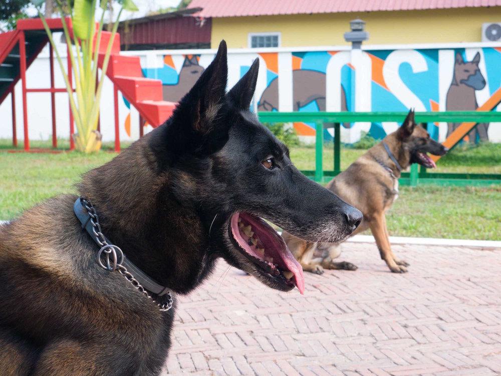 dog-show-14_33037284133_o copy.jpg