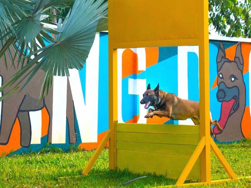 dog-show-18_33809715756_o.jpg