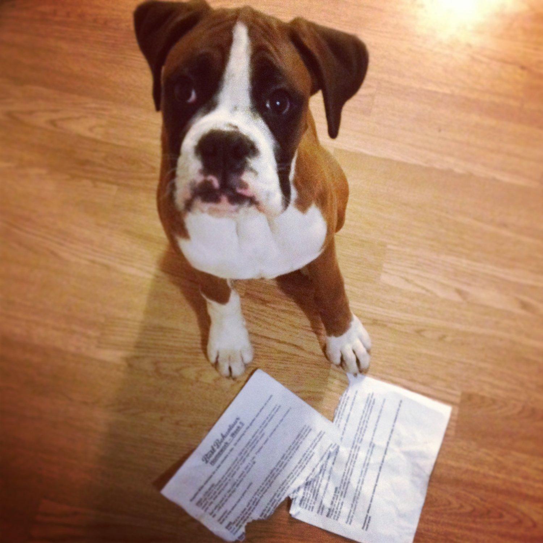 Resultado de imagen para letter to my boxer dog