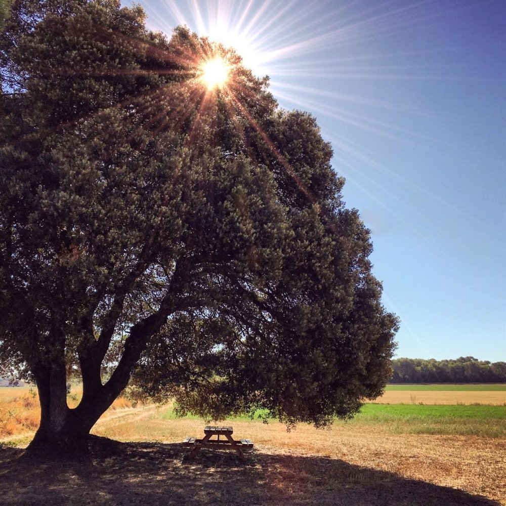 Nature Gerona countryside