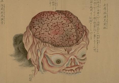 anatomical_scroll_4.jpg