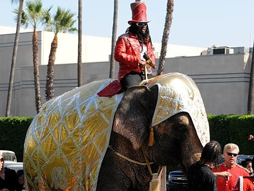 t-pain-elephant.jpg