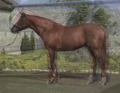 Still from 'Horse' (2012) by John Stezaker