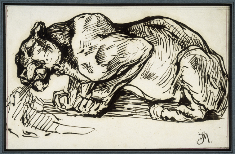 Fig. 1 – Charles Edme Saint-Marcel, Lion, pen and ink, musée Delacroix, Paris.