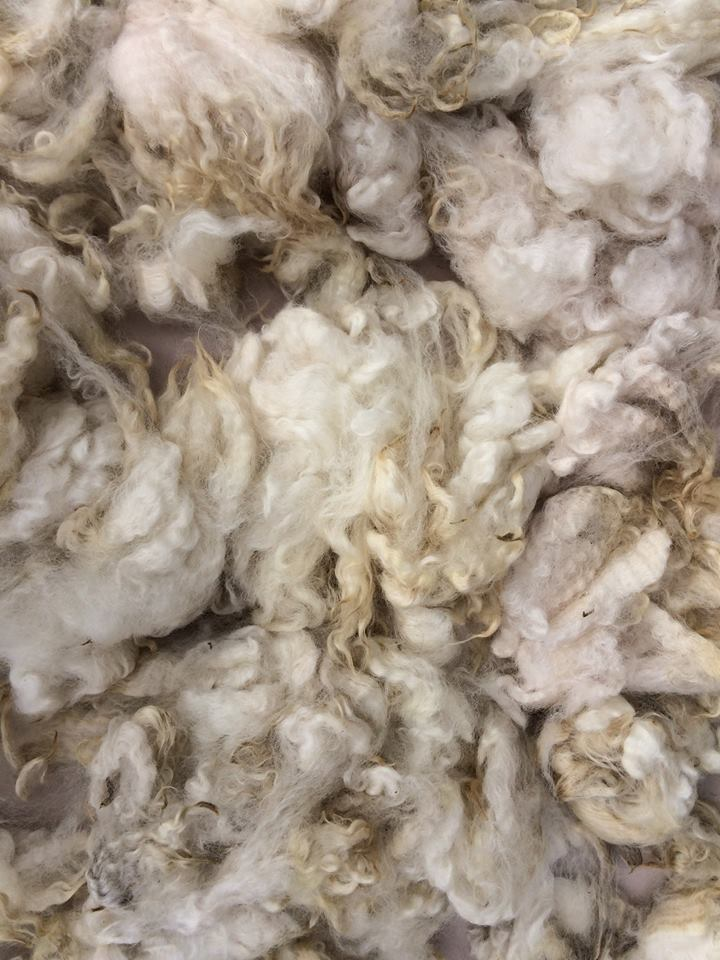 Fleece Patsy