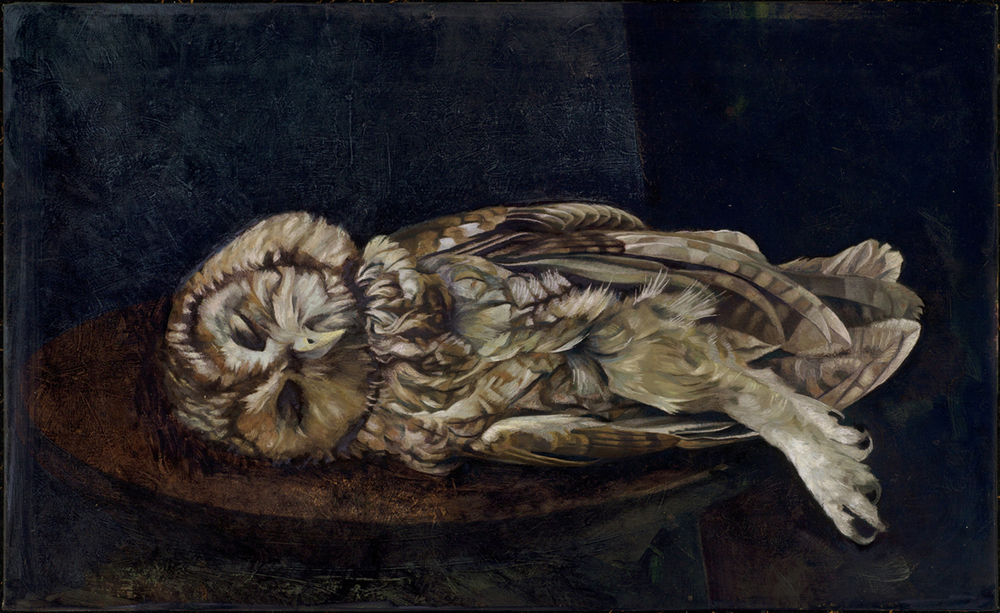 'Tawney or Wood Owl - Strix aluco'  oil on linen on board 40 x 66 cm (16 x 25 inches). private collection.