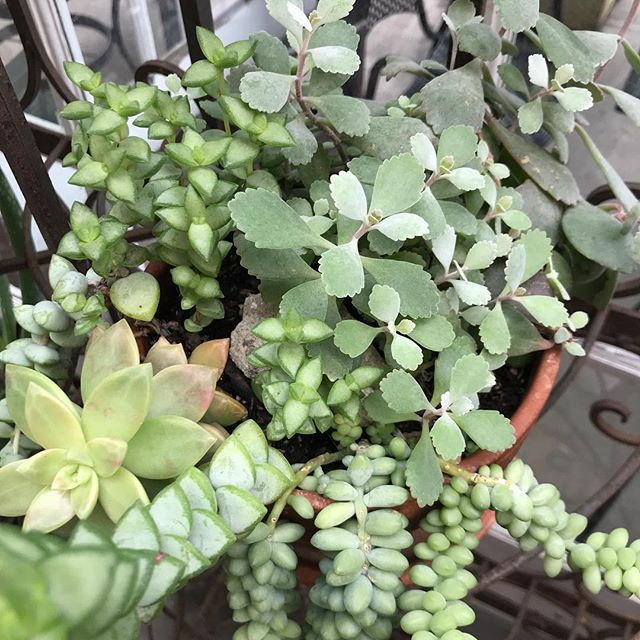 Ready for #Spring!🌸 Loving these new succulents!