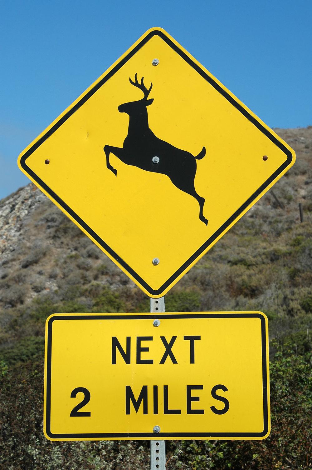 deer-crossing.jpg