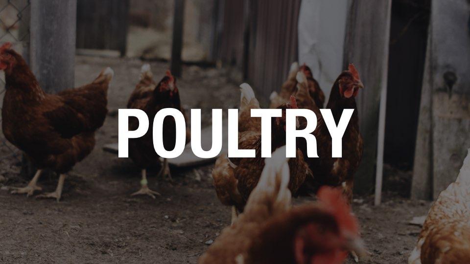 poultry.jpeg