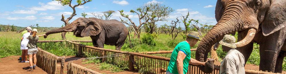 ElephantInteractions2.jpg