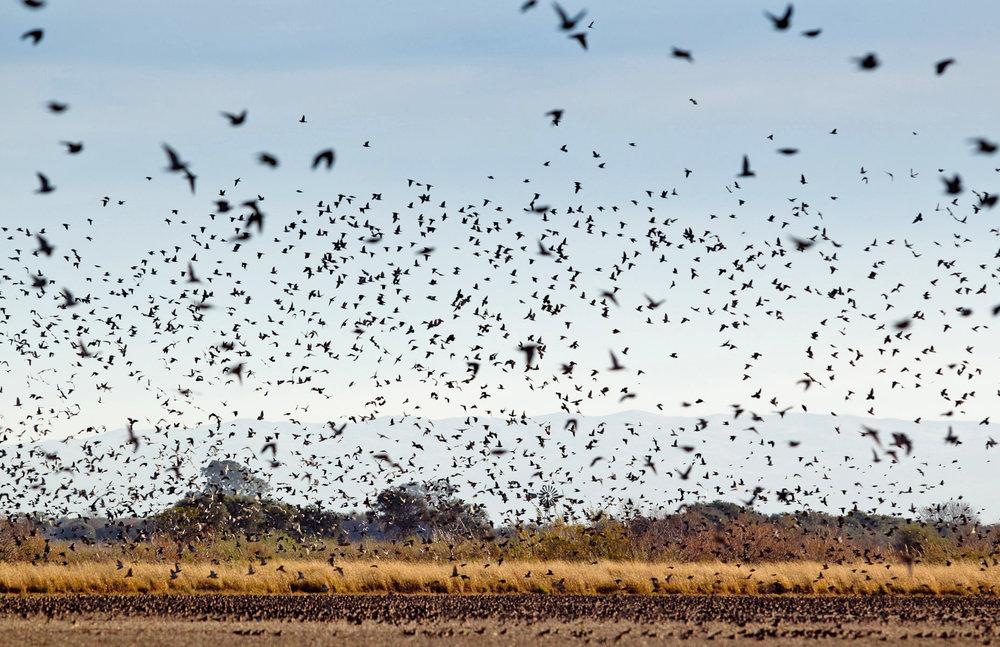 Doves-flying.jpg
