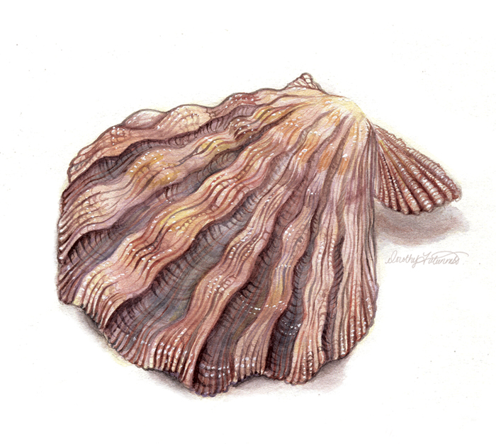 shell_watercolor.jpg