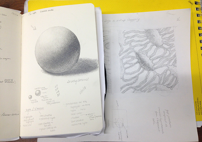 Left : Sketch pad with value sphere.  Right : Illustration of interconnected osteocytes.