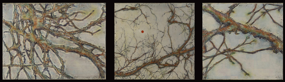 Anatomy of a Tree (Triptych)