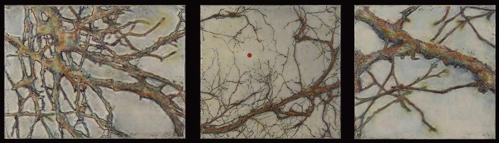 Anatomy of a Tree (Triptych)