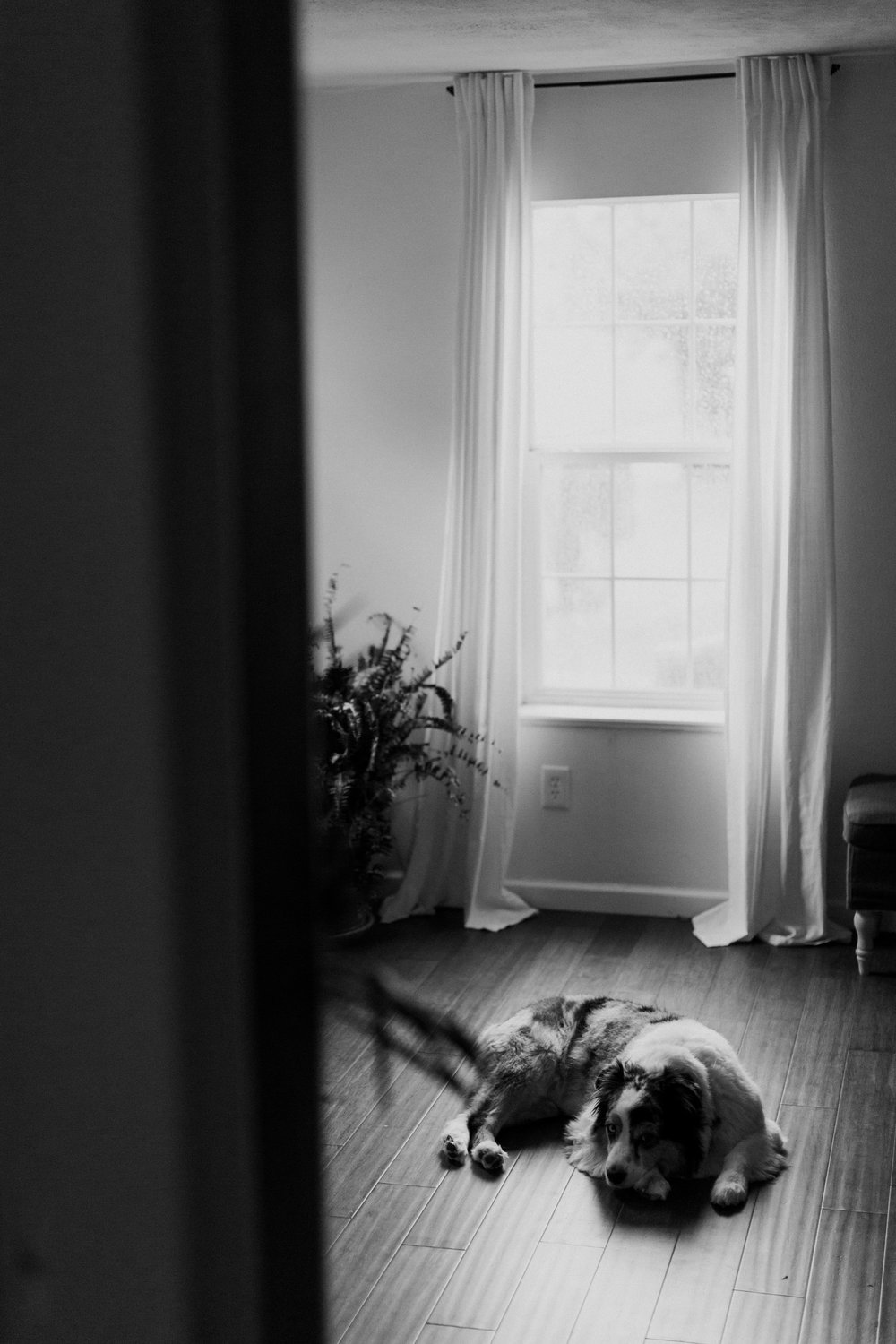 cedarandpines-intimate-in-home-session-38.jpg