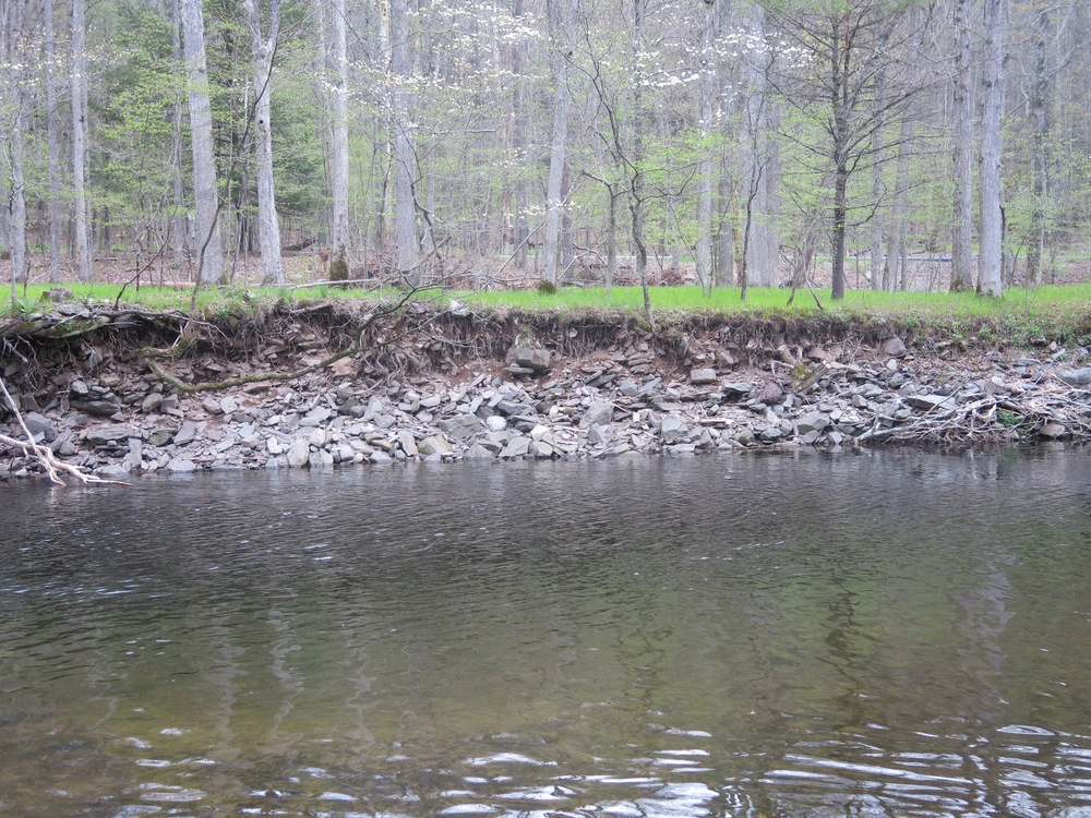 Figure 24.  Erosion. Note absence of trees. Brodhead Creek, Analomink, Pennsylvania.