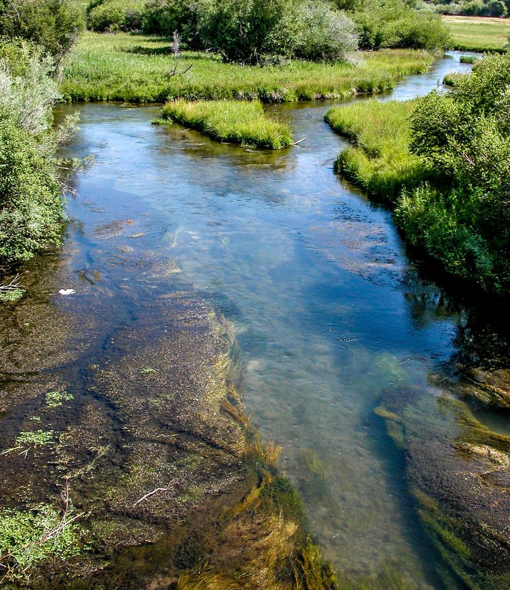Spring Creek, Ennis, Montana.