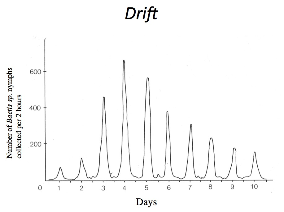 Figure 45.  Diurnal drift pattern for  Baetis  nymphs.