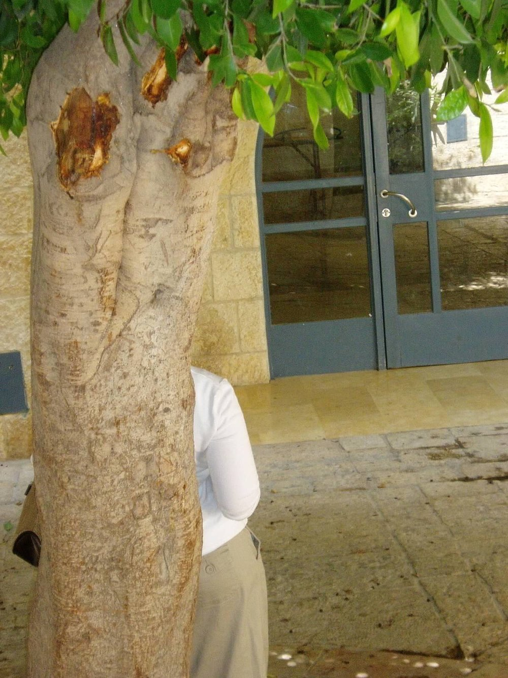 Simcha even wanted to tell stories with his shots... Ilana, stand behind that tree... He gave good direction .