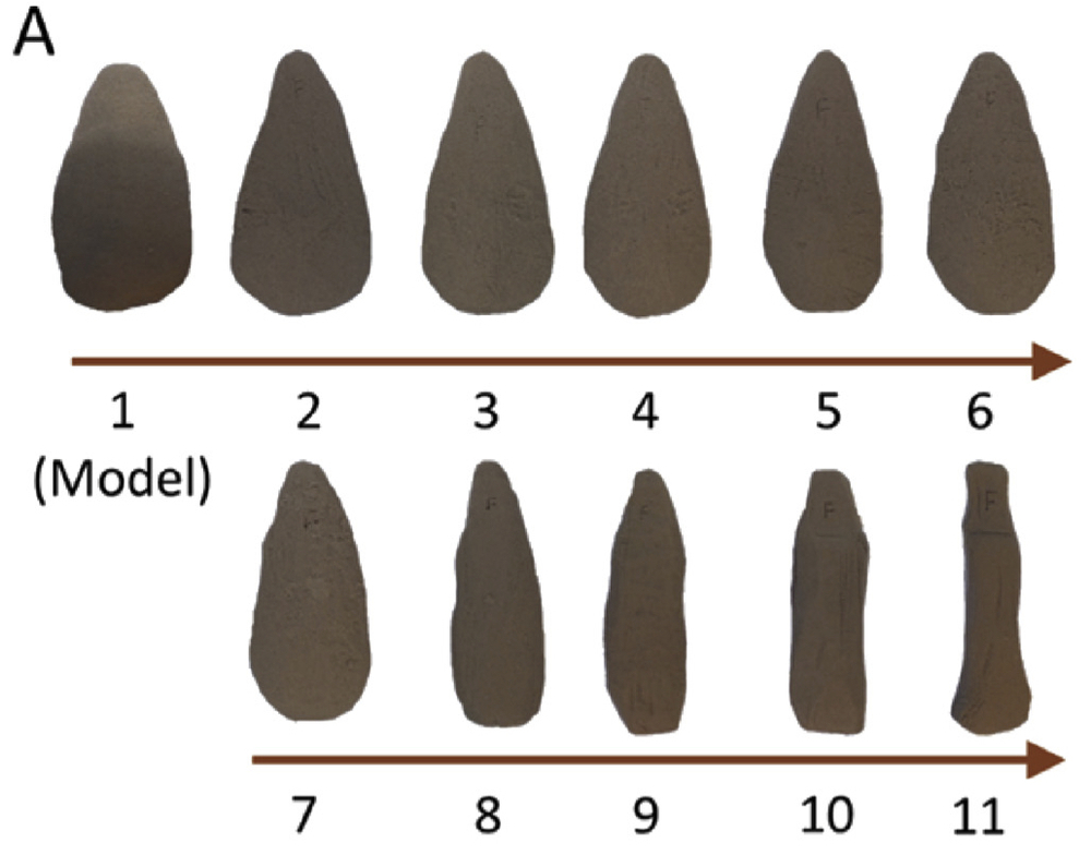 Replica foam handaxes carved by successive participants in Schillinger et al. (2016), later subjected to phylogenetic analysis to determine whether this lineage can be accurately reconstructed