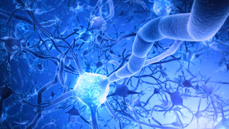Neurology connects brain and body