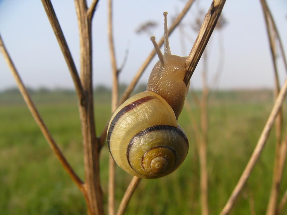 Snail Small.jpg
