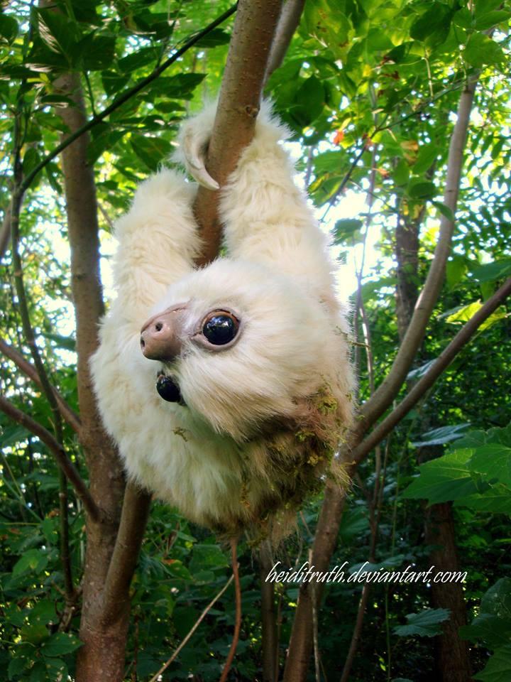 first sloth.jpg