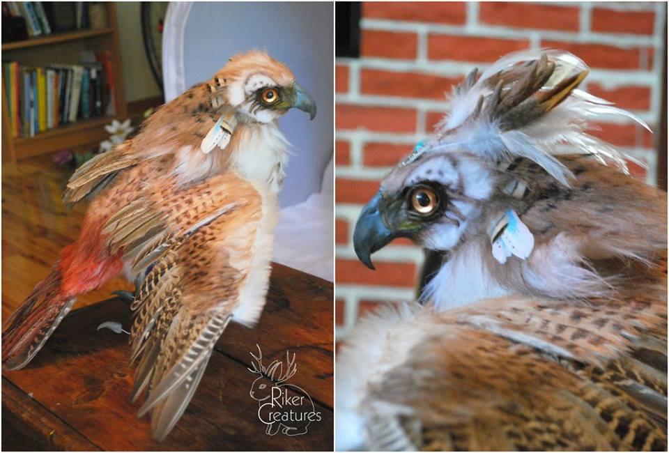 realistic hawk.jpg