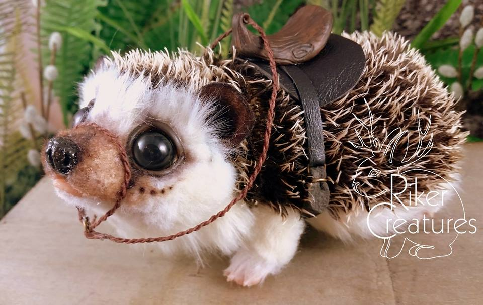 saddled hedgehog closeup.jpg