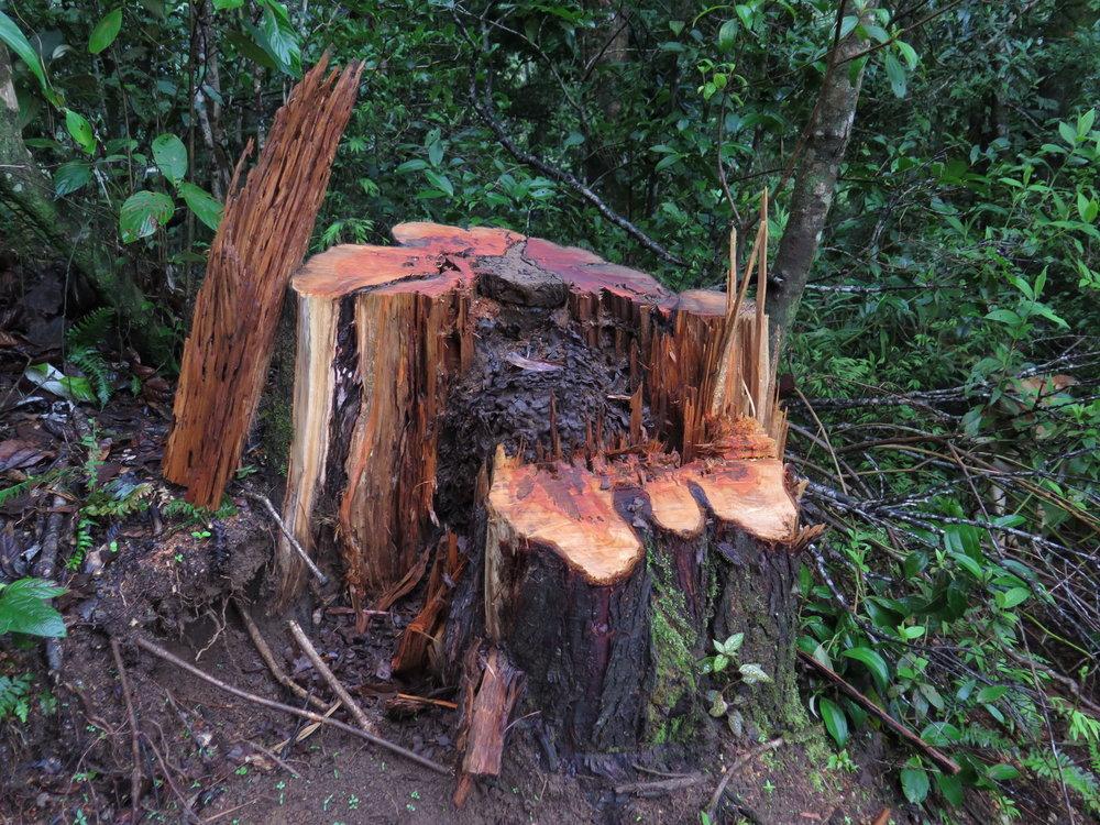 Cypress #ill