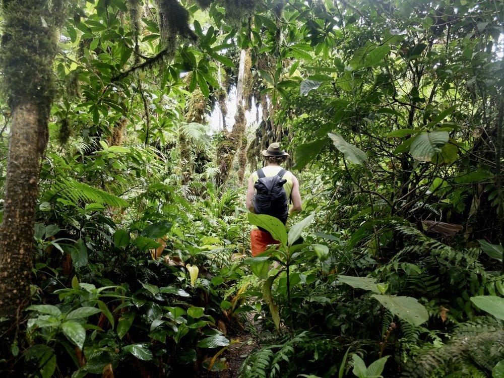 Patikoimassa tulivuoren rinteillä / Trekking at the slope of volcano