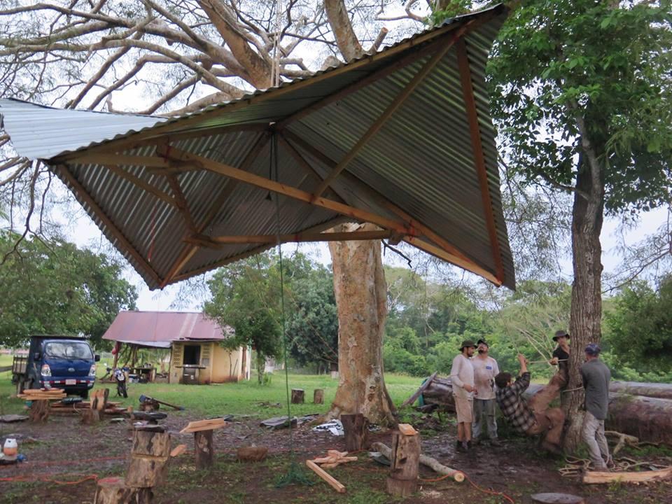 Als alles Wellblech montiert war haben wir es per Handkraft am vorher gesetzten Anker hochgezogen. Der Anker wurde von professionellen Kletterern gesetzt ohne den Baum zu beschädigen.