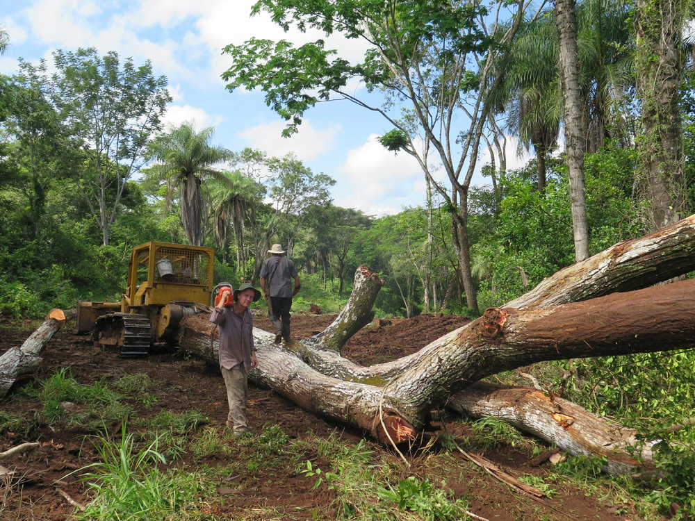 Selective cutting, reforestation efforts, environmental permits, conscious species selection, local job support and short transportation distances all make these trees environmentally and socially responsible.