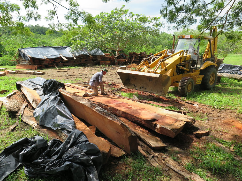 Location: Cocoroca, Punta Morales. Shipyard.  The neighborhood tractor at the yard, re-stacking the sawn timbers. These large pieces will soon become deckbeams and frames of CEIBA.