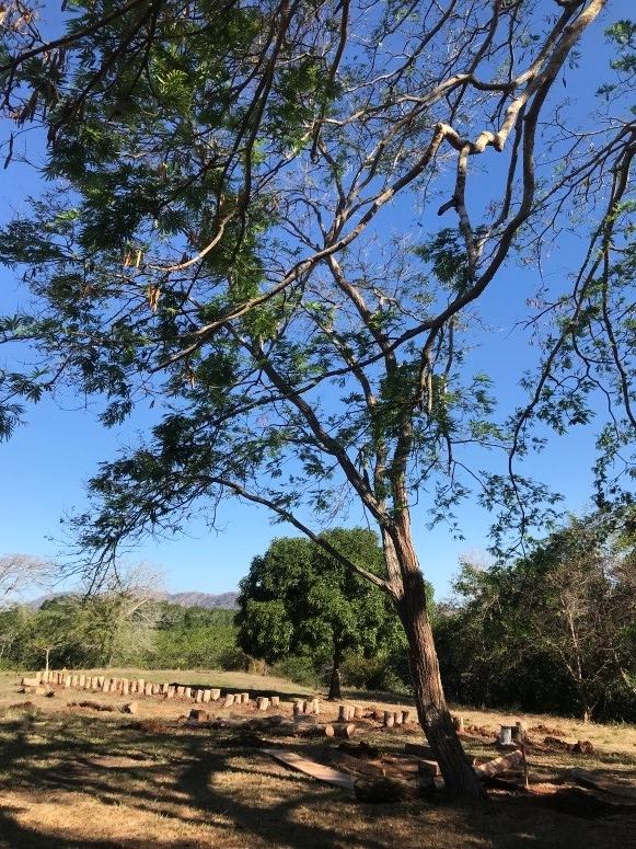 Guachipelín  - (Dyphisa americana)Nativo. Árbol de 4 a 15m de altura. Corteza áspera. Distribución desde 0 – 1900msnm. Flor amarilla observada en enero, marzo y noviembre.