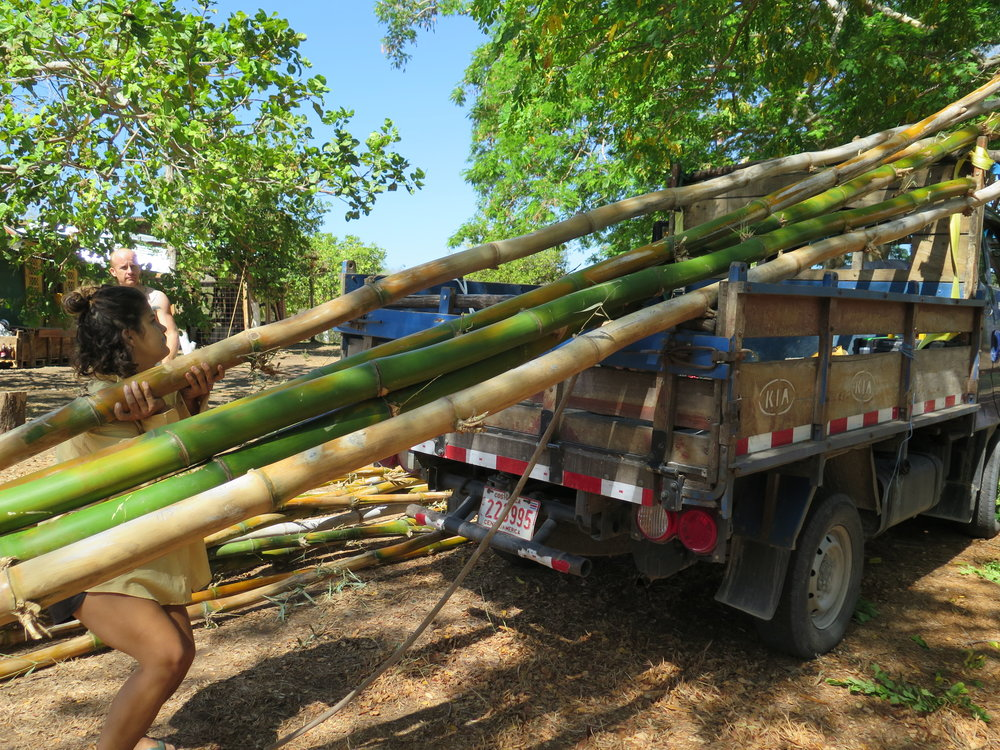 Pria unloads locally sourced bamboo, which will be used for the roof elements of our shipbuilding hangar.