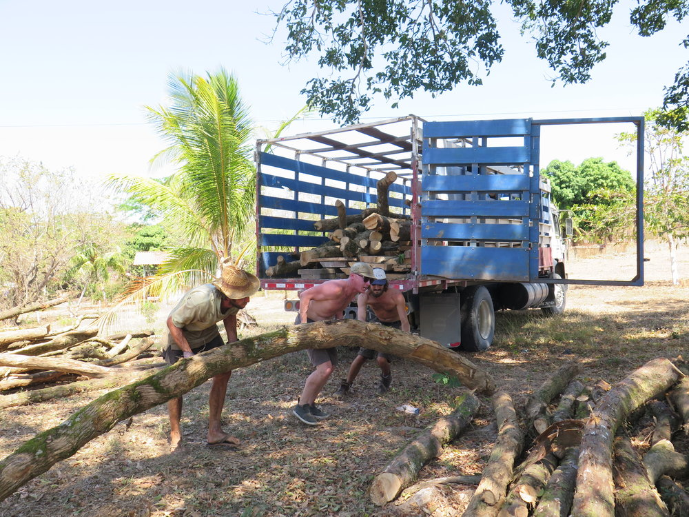 Melle, Bourton + Luke unloading curved trunks of tubu, sourced from Monteverde. This wood is way heavier than you might expect!