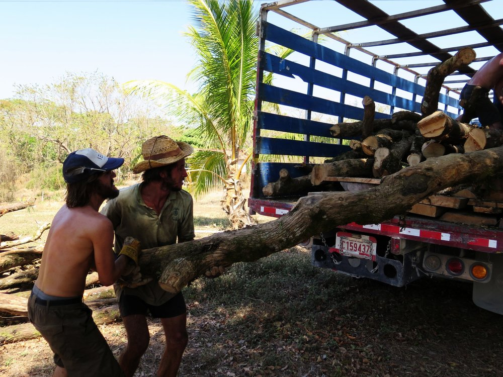 Luke & Melle unloading heavy Tubu posts from Monteverde. These non-native trees were removed by our team, in exchange for our work the home-owner donated this wood!
